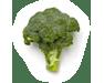 101-brocoli-extra-u