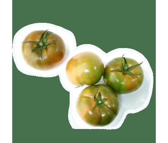 153-tomaquet-verd-extra