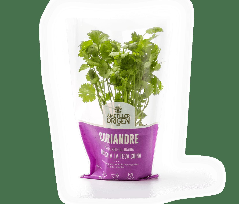 478-planta-coriandre