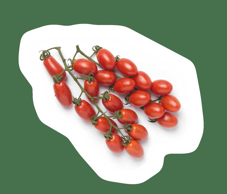 20239-tomaquet-pera-branca